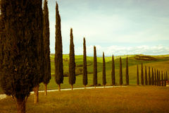 Typical tuscany countryside. Typical tuscan countryside with cypress and meadow Royalty Free Stock Photos