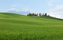 Typical Tuscany landscape Royalty Free Stock Photography