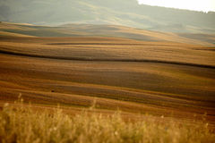 Typical Tuscany landscape Stock Photos