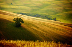 typical Tuscany landscape Royalty Free Stock Image