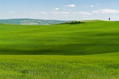 Typical Tuscany Landscape with Hills - Tuscany, Italy. Typical Tuscany Landscape with green Grass and Hills - Tuscany, Italy royalty free stock photo