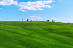 Typical Tuscany landscape springtime. In Italy,Europe Stock Photo