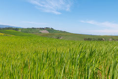Typical Tuscany landscape springtime. In Italy,Europe Royalty Free Stock Photos