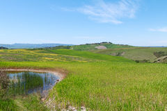 Typical Tuscany landscape springtime. In Italy,Europe Stock Photography