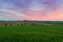 Typical Tuscany landscape springtime. In Italy,Europe Royalty Free Stock Photo