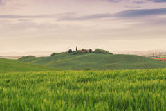 Typical Tuscany landscape springtime at sunrise. In Italy,Europe Royalty Free Stock Images