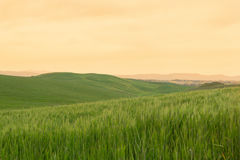 Typical Tuscany landscape springtime at sunrise. In Italy,Europe Stock Photography
