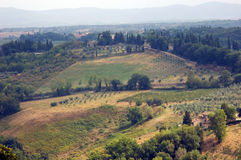Typical Tuscany view. With cypresses and vine royalty free stock images