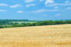 Typical Ukrainian agricultural summer landscape Stock Photos