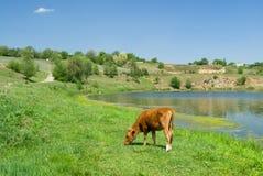 Typical Ukrainian rural landscape Stock Images