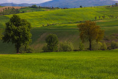 Typical umbria landscape in the spring season Stock Photo