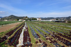 The typical vegetable garden of El Maresme near Malgrat de Mar,. Barcelona province, Catalona, Spain Royalty Free Stock Photography