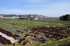 The typical vegetable garden of El Maresme Stock Photos