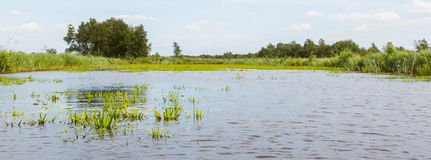 Typical view of a the swamp in National Park Weerribben Royalty Free Stock Photo