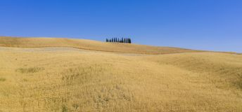 Typical view in tuscan. In italy royalty free stock image