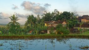 Typical village in the East of Java. Typical village located in the Ijen volcano region, east of Java, and surrounded by rice fields royalty free stock photo