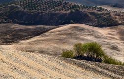 Typicsl Andalucian Landschaft Lizenzfreies Stockbild