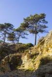 Typisch blootgesteld sedimentair de klippengezicht van de zandsteen op het strand van Praia DA Oura in Albuferia met Pijnboombome stock afbeeldingen