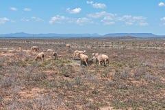 Typisch dor Karoo-landschap royalty-vrije stock afbeeldingen