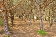 Typisch droog Mediterraan bos Stock Foto