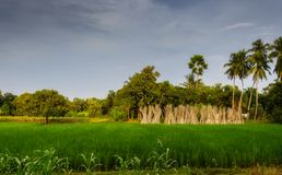 Typisch idyllisch landschap van een dorp van Bengalen, exemplaarruimte Stock Fotografie