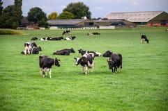 Typisch landbouwbedrijf in noordelijk Holland Stock Foto