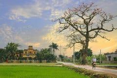 Typisch landschap van het dorp van Vietnam Stock Foto