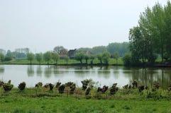 Typisch nat Nederlands landschap Royalty-vrije Stock Fotografie