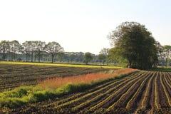 Typisch Nederlands landschap Royalty-vrije Stock Foto's