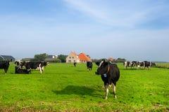 Typisch Nederlands landschap stock foto