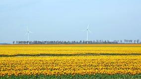 Typisch Nederlands landschap met tulpen en windmolens Stock Afbeelding