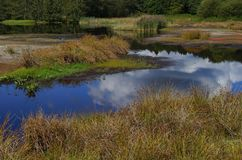 Typisch Nederlands moerasland royalty-vrije stock fotografie