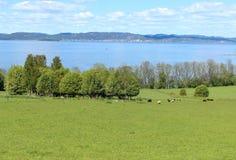 Typisch Noors landschap Royalty-vrije Stock Foto
