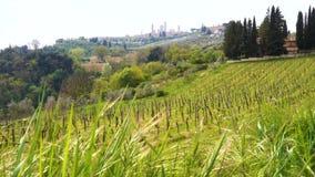 Typisch Tuscanian-landschap stock videobeelden