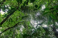 Typische amazonische Vegetation im ekuadorianischen Primärdschungel Stockbild