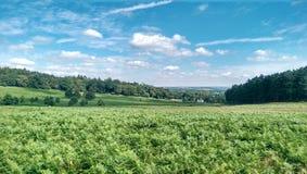 Typische englische Landschaft stockfotos