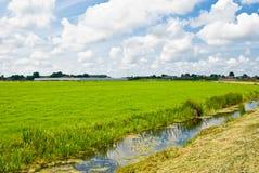 Typische holländische Landschaft stockfotos