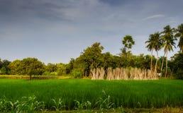 Typische idyllische Landschaft eines Dorfs von Bengal, Kopienraum Stockfotografie