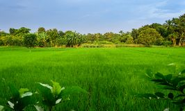 Typische idyllische Landschaft eines Dorfs von Bengal, Kopienraum Stockfotos