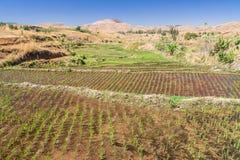 Typische Landschaft stockfoto