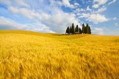 Typische Landschaft in Toskana Stockfoto