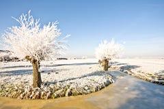 Typische landwirtschaftliche holländische Landschaft im Winter stockfotografie