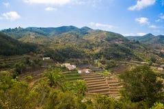 Typische Natur auf La Gomera Stockbilder
