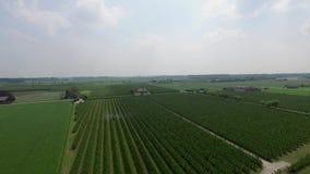 Typische Nederlandse landschappen stock videobeelden