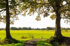 Typische niederländische Landschaft der Wiese mit Kühen Stockbild