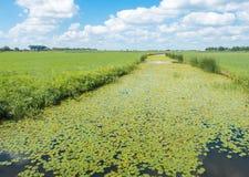 Typische niederländische Polderlandschaft in der Sommerzeit Stockfotos