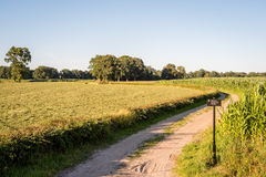 Typische niederländische Sommerlandschaft im Juli nahe Delden Twente, Overijssel Stockfoto