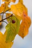 Typische schaduwen van de herfst Royalty-vrije Stock Fotografie