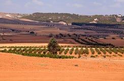 Typische spanische landwirtschaftliche Landschaft Lizenzfreie Stockfotografie