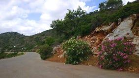 Typische Straße auf der Insel von Kreta während der Frühlingsblüte Lizenzfreies Stockbild